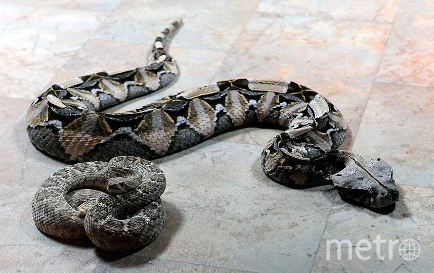 Ядовитая змея заползла в подъезд дома в Москве. Фото Getty