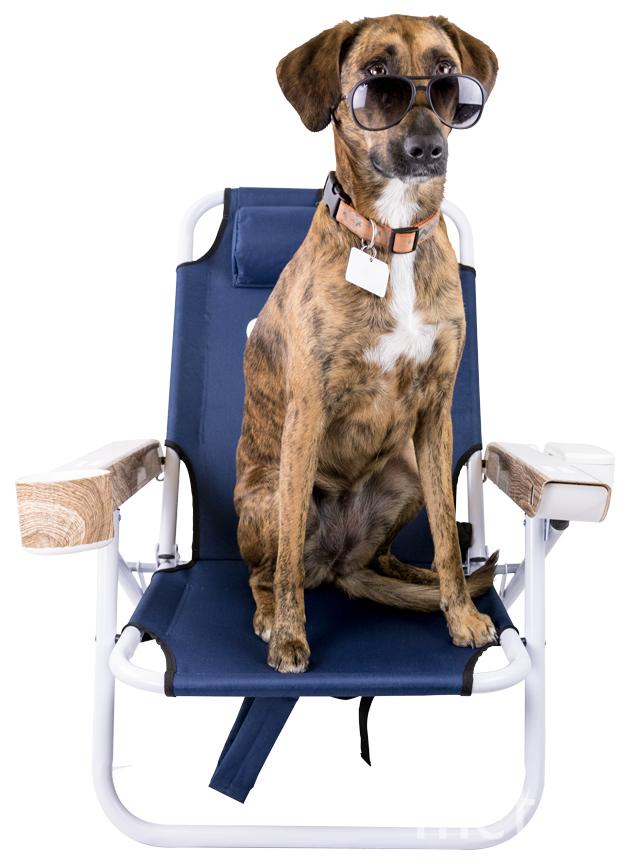 Умное кресло. Фото Shaze