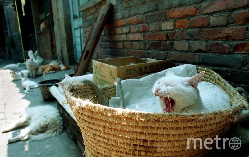 День кошек отмечается в Петербурге. Фото Getty