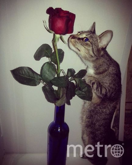 """Мою кошку зовут Маргоша, назвали мы ее так, потому что у нее есть буква """"М"""" на лбу. Она живет с нами уже три года и очень привязана к нам, каждое утро будит нас) Маргошка очень общительная, всегда разговаривает с нами. Недавно у нас в доме завелись мыши, так если бы не Маргоша, не знаю, что бы мы делали. Она просто спасла нас всех, поймала пятерых мышей. Фото Лана"""