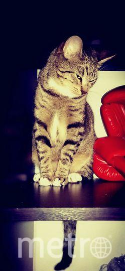 Это наша любимая кошка Тома. Вечно куда-то залазит, а потом с грациозным видом любит садиться на полку и позировать.