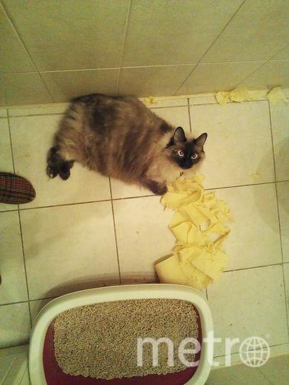 Мою кошку, породы курильский бобтейл, зовут Мышка. Характер у неё приятный и вполне себе покладистый, но, видимо, аккуратно смотанный рулончик туалетной бумаги с её точки зрения недостаточно красиво смотрится! Недостаточно живописно, видимо. Фото Наталья
