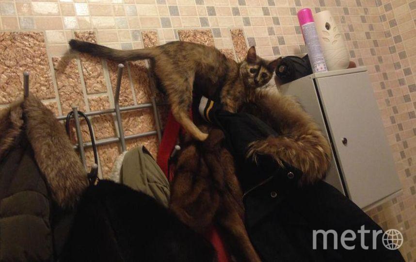 Меня зовут Давид. На фото Бублик, наша маленькая кошка-исследовательница! Буля любит забраться повыше, и порой оказывается в самых неожиданных местах ... В этот момент, она куда то целенаправленно пробиралась.