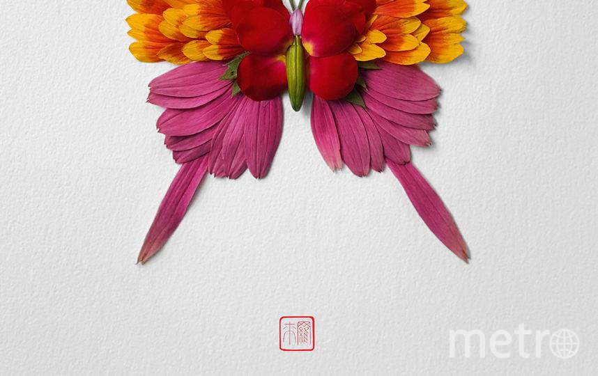 Бабочка. Фото Raku Inoue