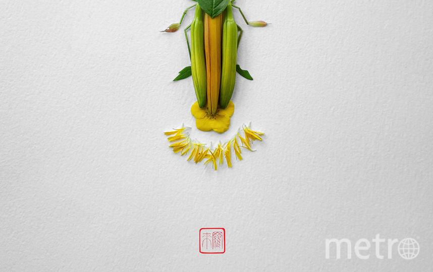 Светлячок. Фото Raku Inoue