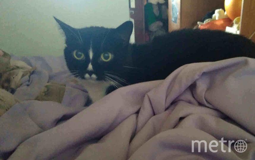 Дашка, кошка моей мамы, временно проживающая у нас. Она очень любит залезть на разобранную постель, что ей категорически запрещено. Сегодня утром была поймана с поличным. Фото Кочанова Людмила