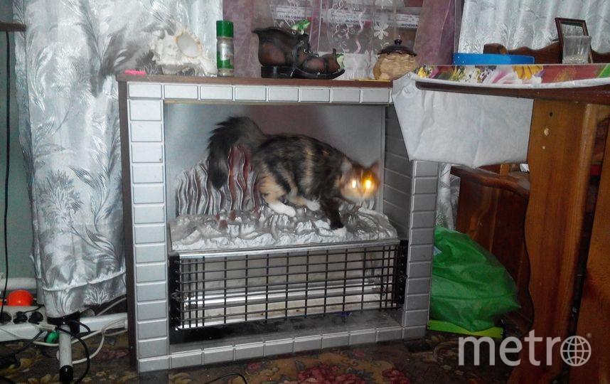 Кошка Чуня, которая не упускает возможности куда-либо забраться, залезла в камин! Сегодня ночью она стала мамой 4-х очаровательных котят! Фото Лена Загирова