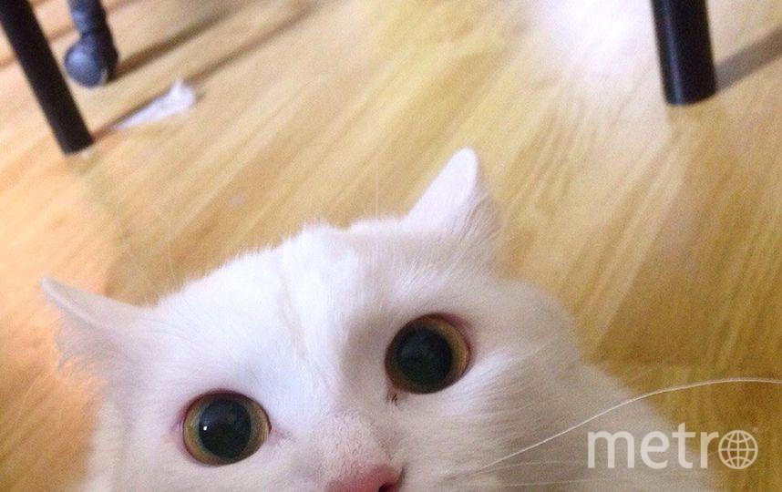 Это чудо моего бывшего молодого человека , зовут Гадзила. Оправдывает свою кличку вполне =) Она глухая, поэтому очень любит громко орать, но она все равно очень ласковая. Хотя на этой фотографии она охотилась за мной, и я проснулась от того что меня лупасили лапой по лицу =) В общем не кошка- а будильник. Фото Александра