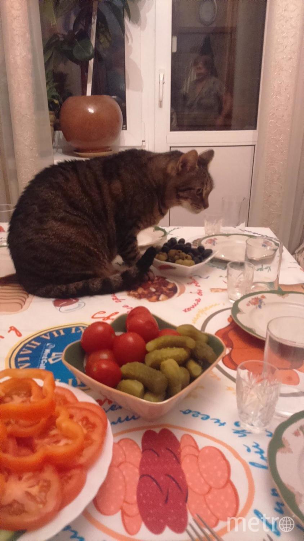 Высылаю фото нашего кота Ричарда, любителя оливок. Если случайно оставить их на столе, он тут же прибегает и съедает. Нашему ангелочку 10 лет. И он самый лучший кот на свете. Фото Людмила