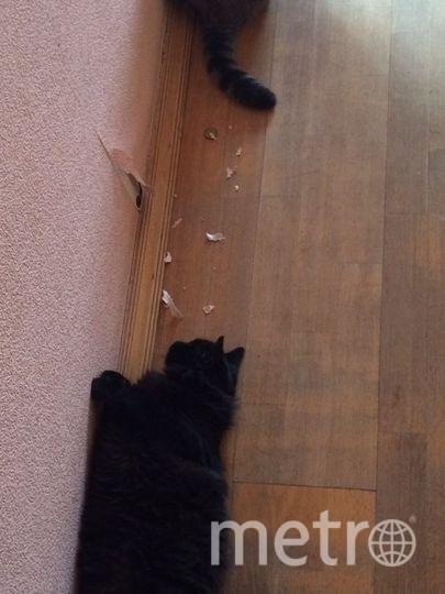 Это Бегги сокр. от Багира, но пока грациозной чёрной кошки из неё не вышло ( Это неутомимый искатель приключений и проказник. Бегги круглыми сутками генерирует идеи развлечений. Часто вдоволь наигравшись, засыпает на месте «преступления». Её основное хобби – отковырять кусочек обоев на самом видном месте и рвать его зубами на мелкие кусочки, издавая при этом забавные звуки. Из раза в раз она искренне не понимает, за что её ругают, ведь это было так увлекательно. Фото Виктория