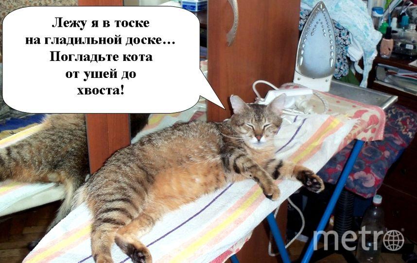 На фото - наш кот Кузя, который воспользовался моментом, когда гладильная доска была ещё тёплой. Фото Василий Позднев