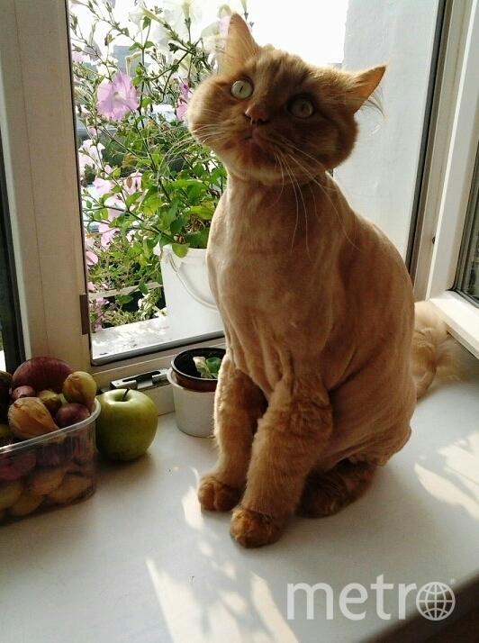 """Кота зовут Масяня. Шалун. """"Какой-то звук я слышу странный - Как-будто кто-то без меня На кухне тихо ест сметану, По банке ложкою звеня!"""". Фото Зырина Нина"""