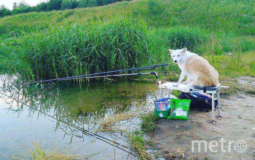 Жужа всегда мечтала поймать рыбку... Пока хозяева купались, Жужа заняла серьезные позиции. Фото Яковлева Дарья