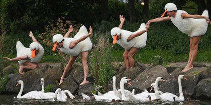 Танцоры в костюмах лебедей рассмешили зрителей фестиваля в Эдинбурге