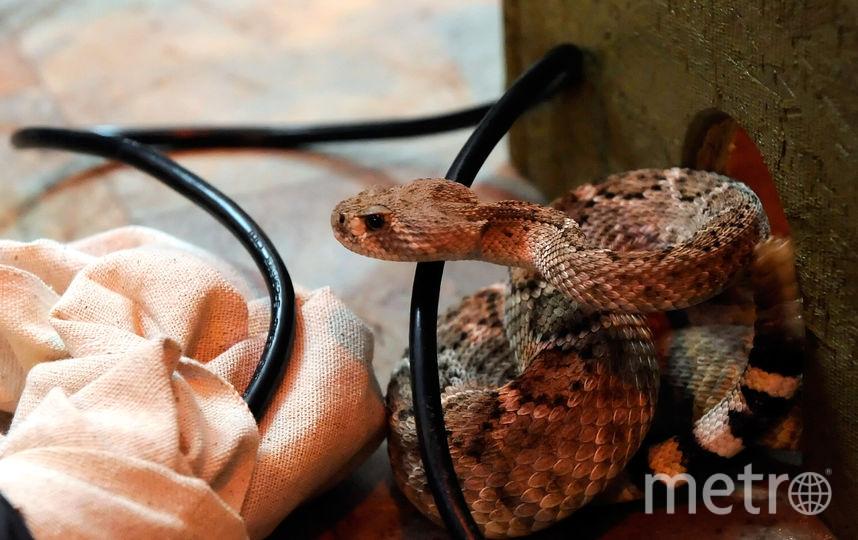 Змея напугала петербуржцев в Калининском районе. Фото Getty