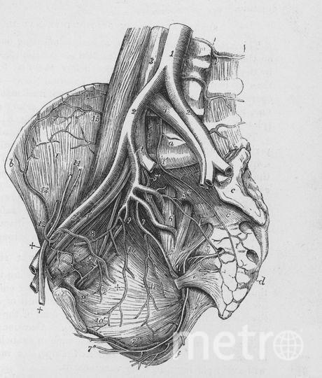 Сердце. Фото Getty