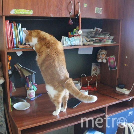 Вот такой у нас замечательный кот, по кличке Дрюшка! Сколько и куда от него не прячь мясо, бутерброды с колбасой, другие вкусности - найдет и упрет всё! Фото Валентина.