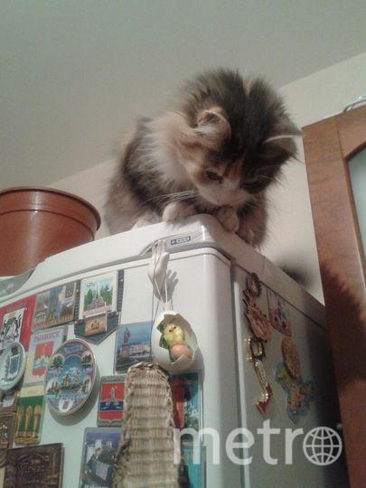 Это кошка Дашка. Она, как и любая кошка, считает людей низшими существами. Поэтому любит прыгать на холодильник и взирать на всех свысока. Фото Захаров Артём.