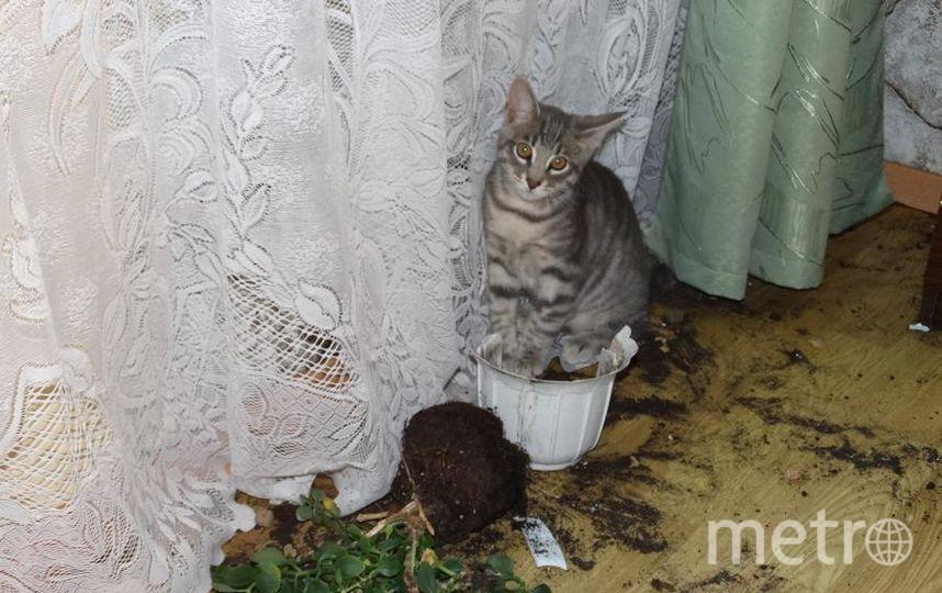 Меня зовут Татьяна. Это наш хулиганистый кот Макс. Он у нас очень игривый и очень кусачий, очень любит кусаться, любит всё грызть как собака. Вывел дома все цветы.