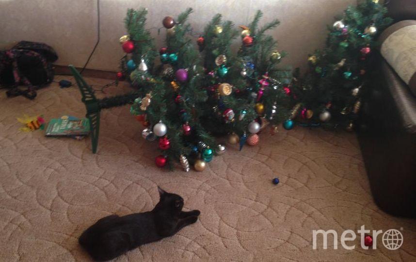 это наш кот Тишка, настоящий хулиган мальчишка. Любит шкодить и хулиганить, но при этом он очень ласковый и мурчащий котик. Фото Мальцева Оксана
