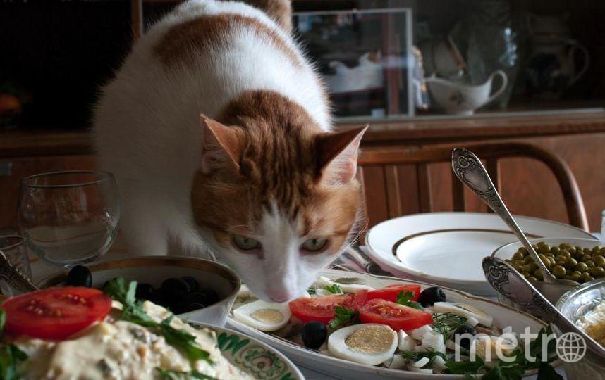 Присылаю вам фото нашего кота Хити (сокращенно от Хищный). Фото сделано давно, семь лет назад, на дне рождения сына. Это он проверяет, нет ли на столе чего для него вкусного. Осенью Хите будет 17 лет, но он до сих пор любит похулиганить. Фото Иванов Владимир Дмитриевич, 55 лет