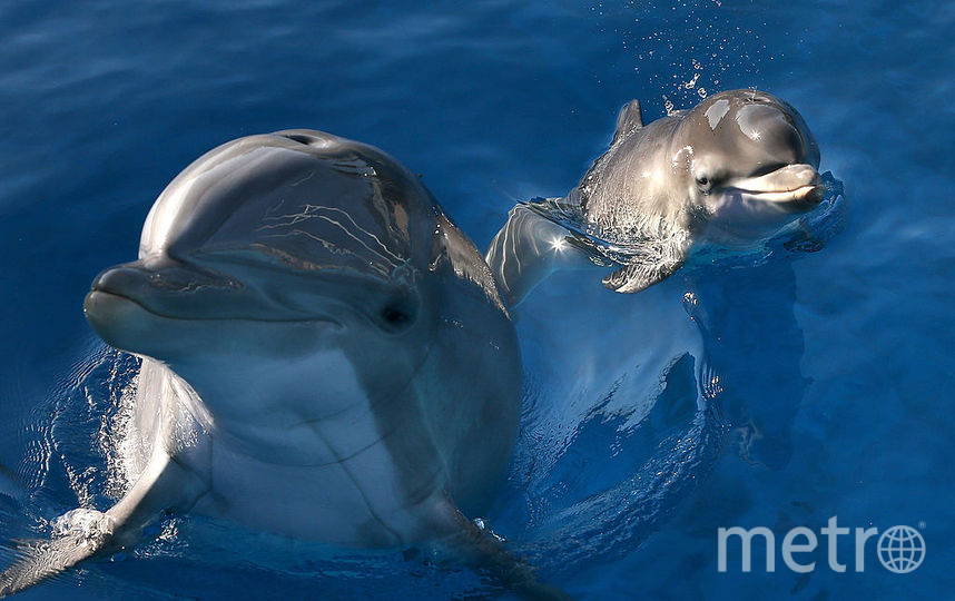 Ради селфи туристы в Испании до смерти замучили дельфинёнка. Фото Getty