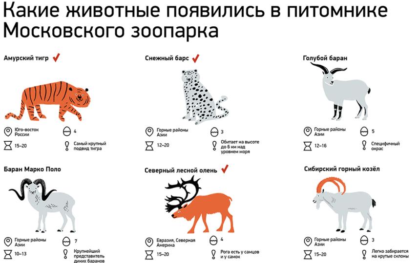 Недавнее пополнение зоопарка. Фото mos.ru