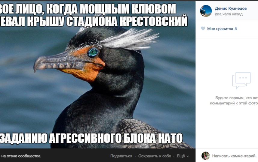 "Баклан, клюющий стадион ""Санкт-Петербурга"", стал мемом и завел аккаунт."