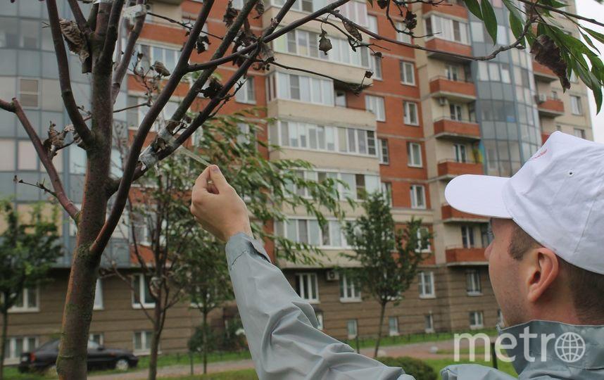 ОНФ в Санкт-Петербурге /vk.com/onf_spb. Фото vk.com