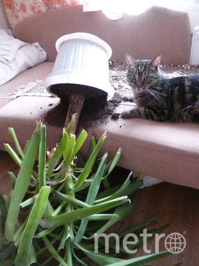 Моего кота, породы двортерьер, зовут Барсик. Вся семья его боготворит. Но характер у него не сахар. Чуть что не по его вкусу- сразу начинает мстить. Кому и за что он отомстил в этот день, он до сих пор не сознался:))) Елена.