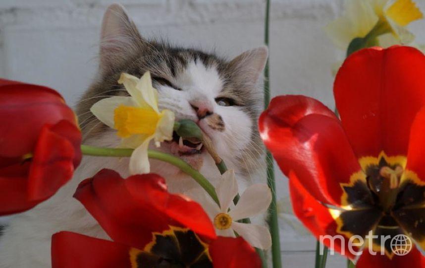 Кошка Клава , 9 лет, порода неизвестна, родители неизвестны. Любит цветы.