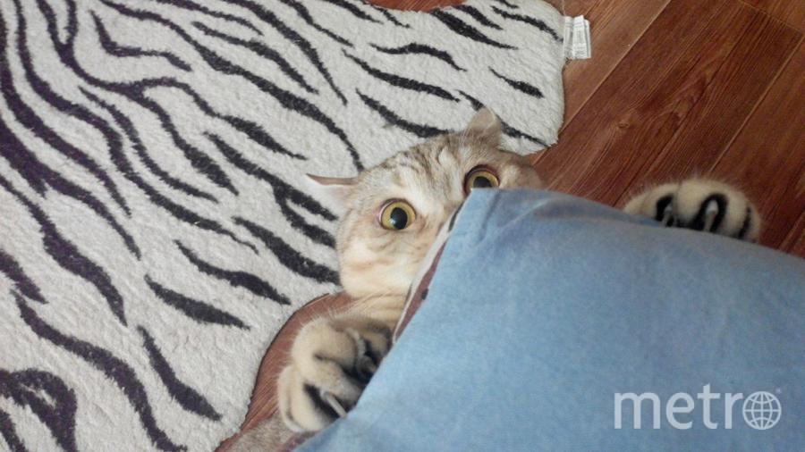 Меня зовут Юрий, а это моя кошка Impossible, а проще Пося. Имени своему соответствует полностью. Невозможно красивая и невозможно шкодливая!