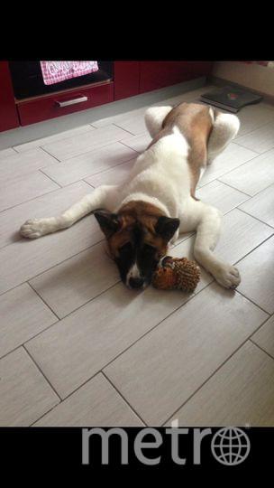 Наш пёс Тенси очень не любит оставаться один дома. Когда ему становится грустно, он начинает развлекать себя и соседей! Екатерина.