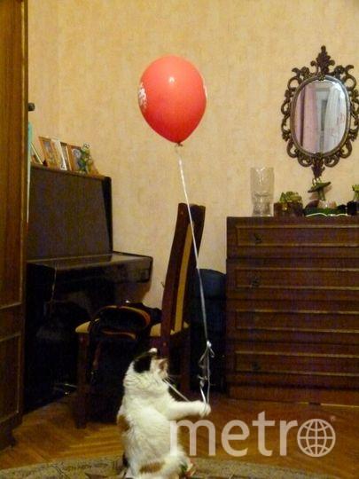 Нашу кошку зовут Дуся. Она похитила один из шаров и собирается со всеми идти на праздник. Фото Валерий Семенов