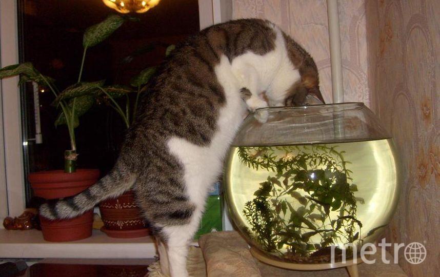 Это наша Луша. Просто любуется рыбками. И при ближайшем рассмотрении приходит к выводу, что они ей совсем не интересны. Некрасова Нина.