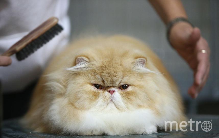 Хозяйка не знает, где кот был всё это время. Фото Getty