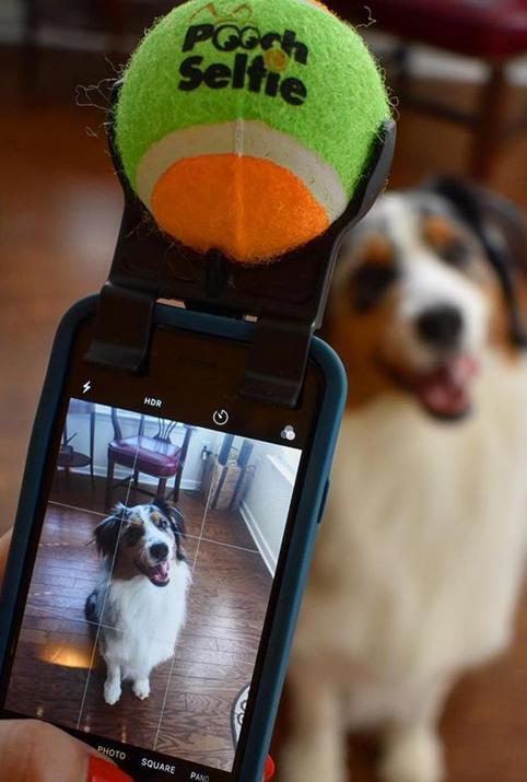 Заведи собаку и сделай её звездой Instаgram. Фото instagram @vladimir_vvs, @poochselfie, скриншот youtube @Mir24tv