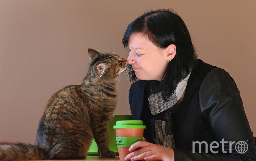 Кошка. Фото Getty