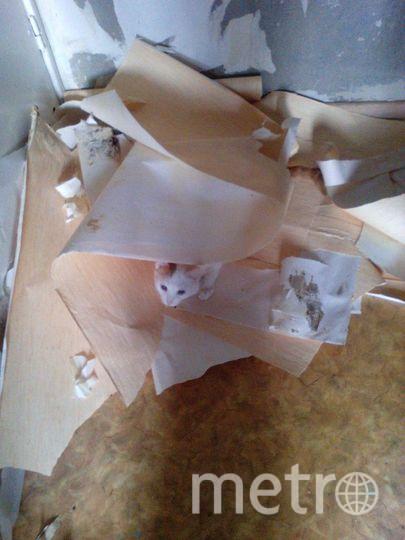 Это наш Мося Заплаткин. Подобран с улицы. Очень активный, игривый, общительный кот. Очень любит обниматься.