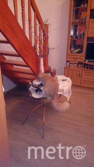 Меня зовут Алёнушкина Анастасия. Это любимец нашей семьи Барсилонас.А если коротко то Барсик. Дело было перед Пасхой. Мы ушли с мамой на завтрак на кухню и увидели это чудо. А в обед наш гурман решил перекусить куличом. Видать и котам не чужд этот праздник.