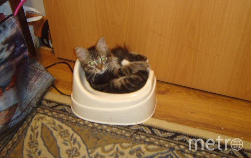 Это наш котик Марсик. Любит тазики, коробочки,горшки и другие емкости. Фото Марина, читатель Metro.