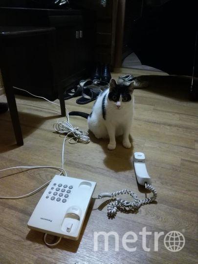 Это моя кошка Соня. Ей 5 лет, но она до сих пор любит поиграть и похулиганить. Здесь она в очередной раз сбросила на пол телефон. Михаил.