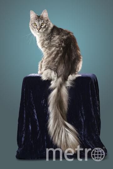 Кот Сигнус. Фото Guinnes World Records