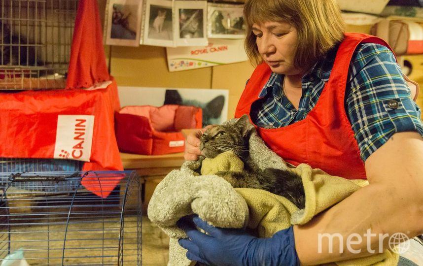 Спасение котов. Фото пресс-служба Эрмитажа, vk.com