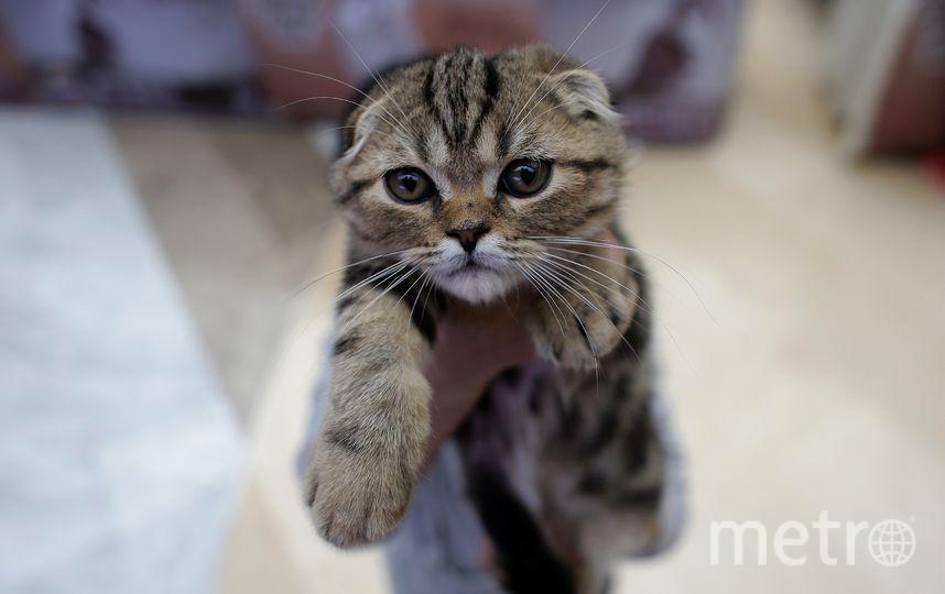 КоШарики Шоу. Фото Getty