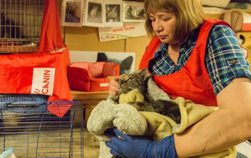 Спасённый после пожара кот. Фото пресс-служба Эрмитажа, vk.com