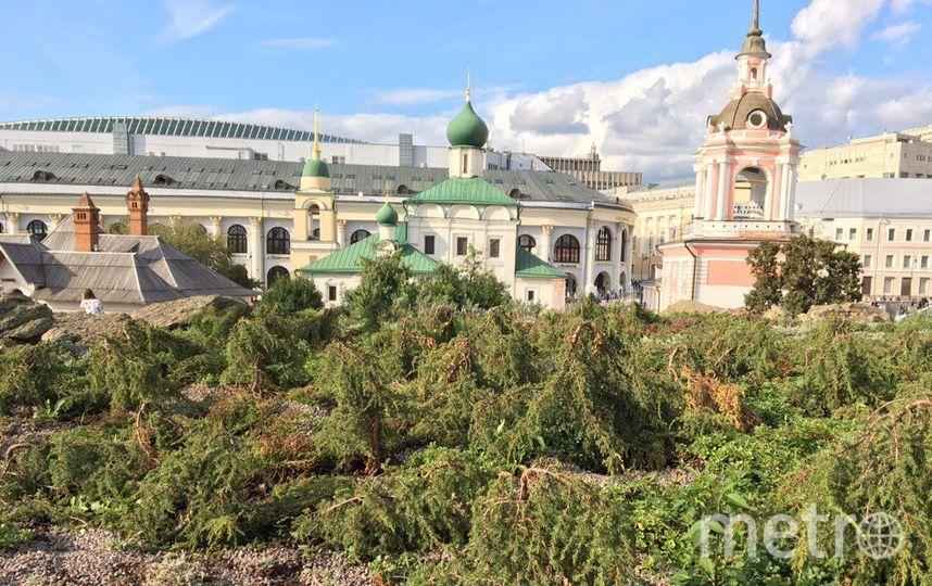 "Парк ""Зарядье"". Фото Дарья Буянова."