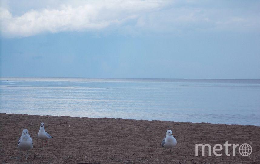 Ладога. Фото федулов сергей