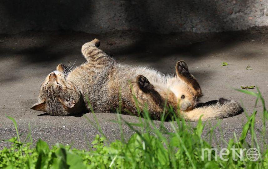 Себя любимого сфотографировать не удалось, но солнечные дни этого лета я проводил приблизительно вот так. Фото Станислав Вершинин.