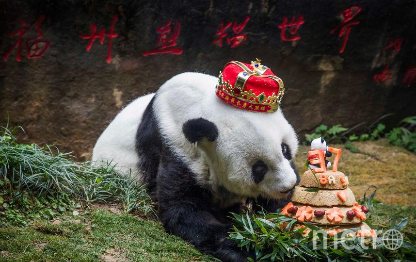 Панда Басы. Фото AFP